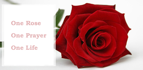 One Rose, One Prayer, One Life